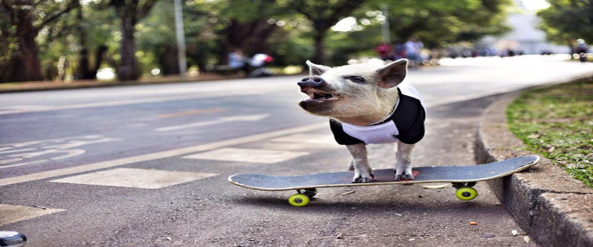 skateboard resized