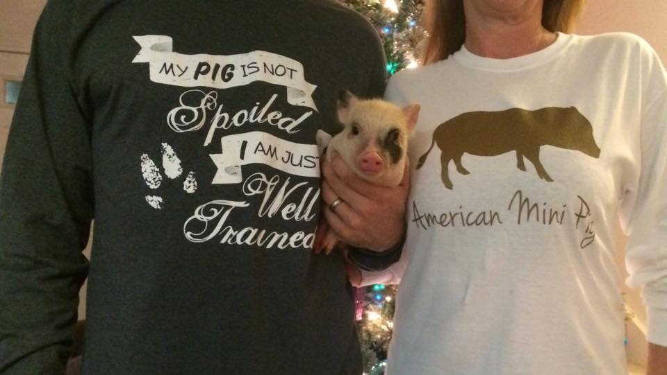 AMPA mini pig store