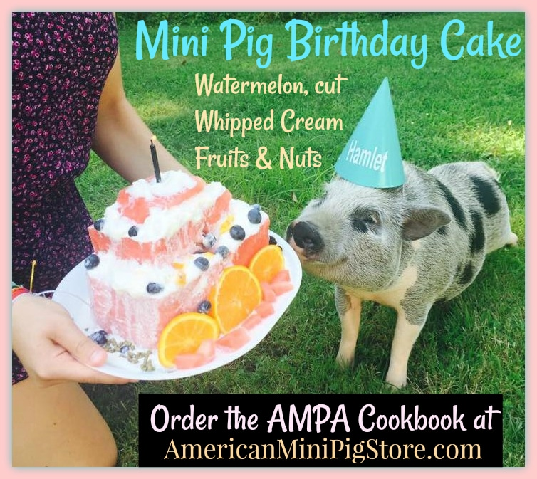 watermelon cake mini pig birthday