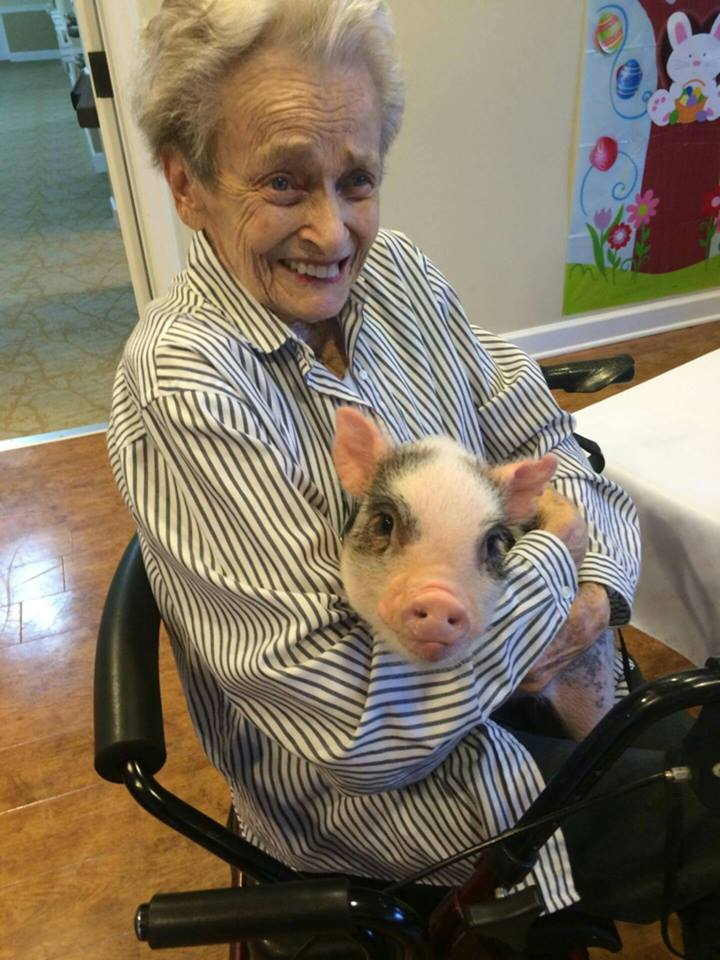 charlie the mini pig hero