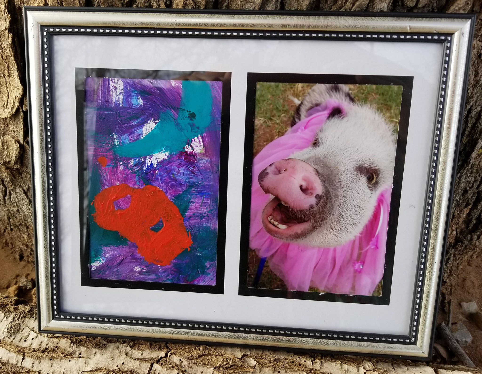 snout art mini pigs painting with their snouts