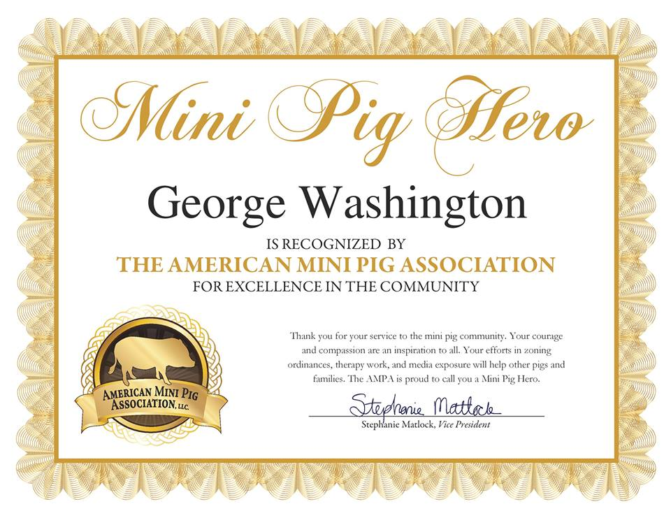 mini pig hero