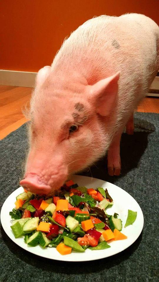 canadian salad