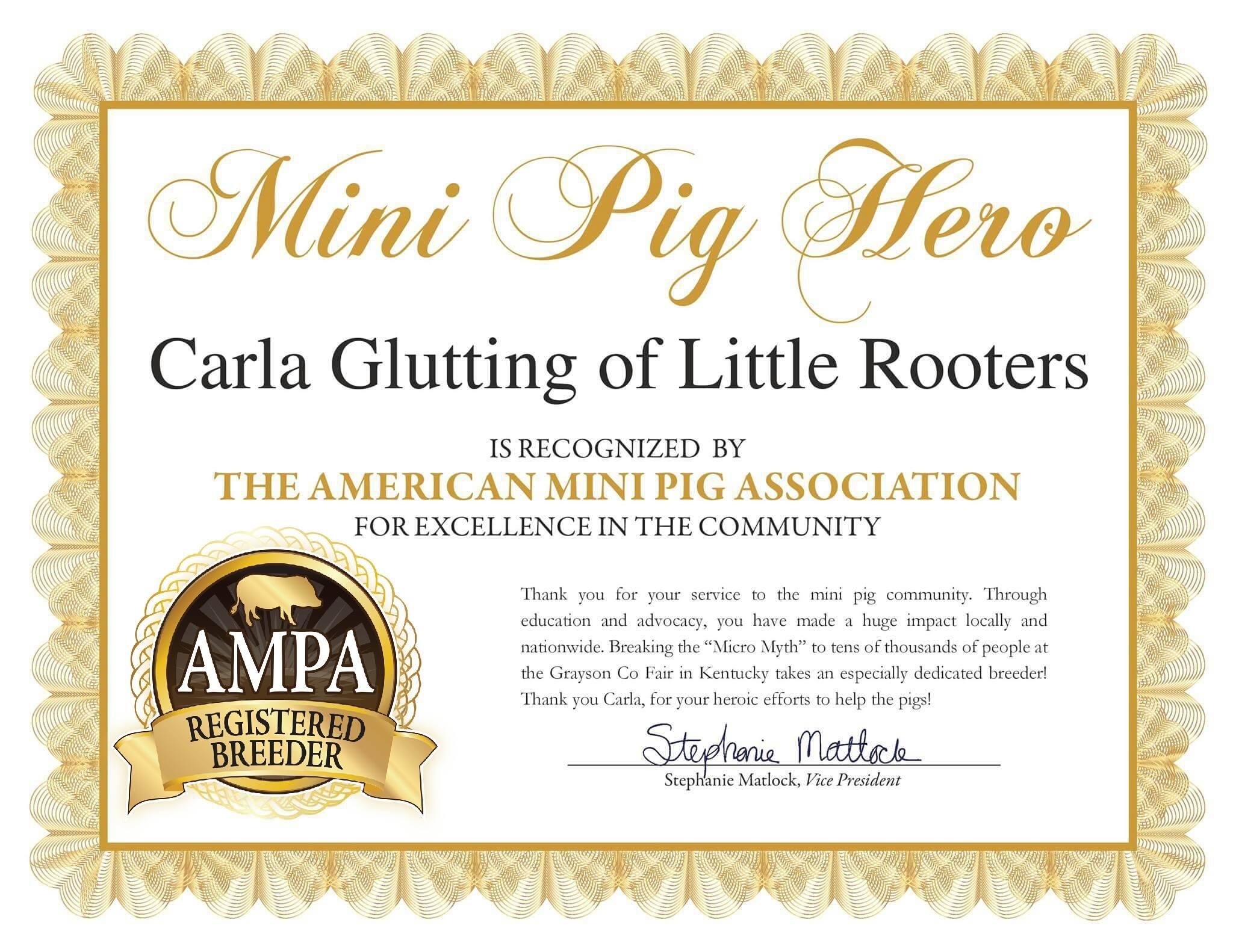 mini pig ambassador