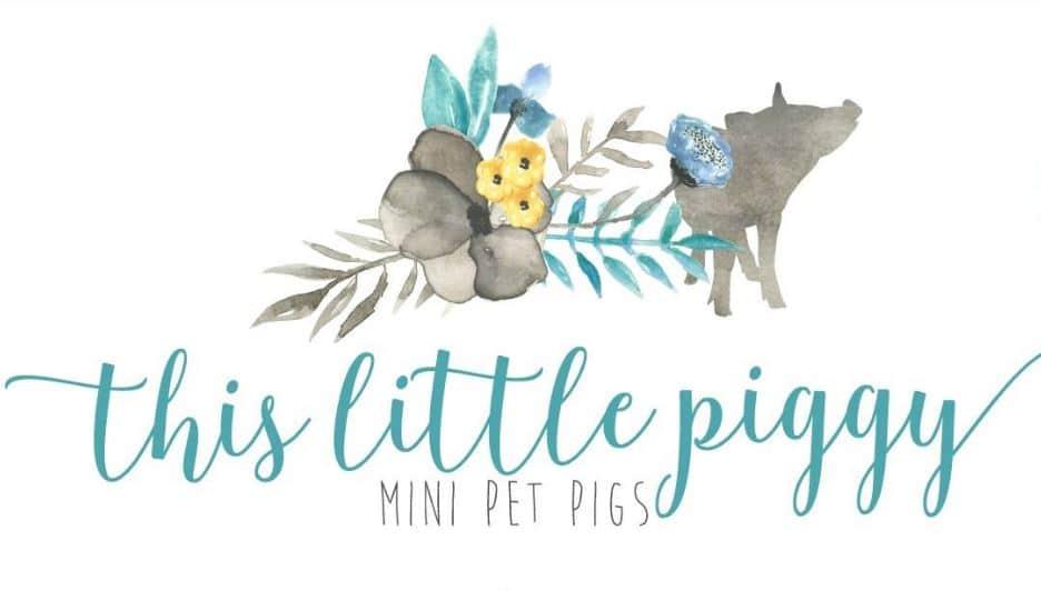 this little piggy mini pet pigs