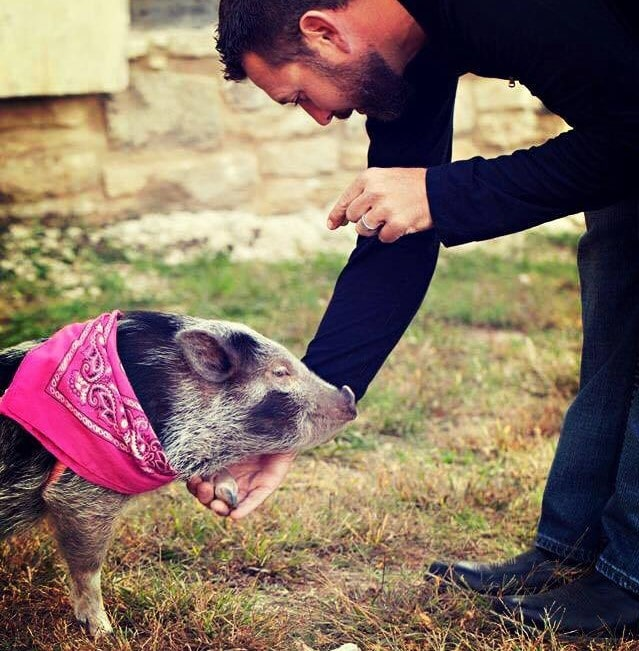 therapy pig certification