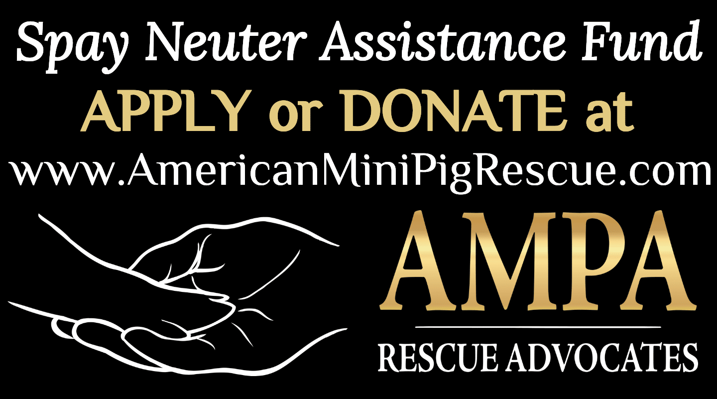 low cost spay neuter assistance