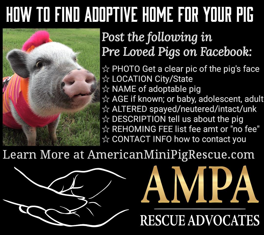 pre loved pigs