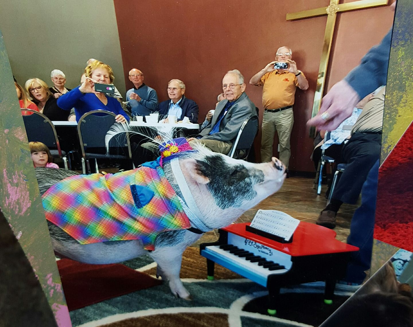 therapy pig