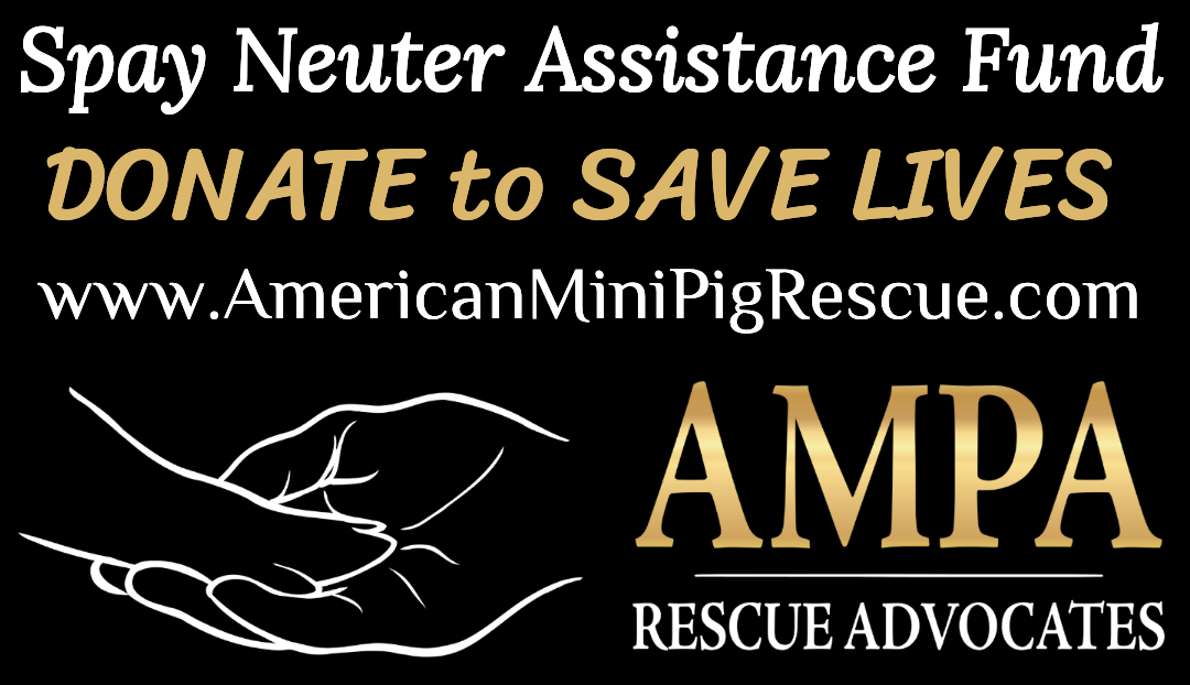 mini pig spay neuter assistance