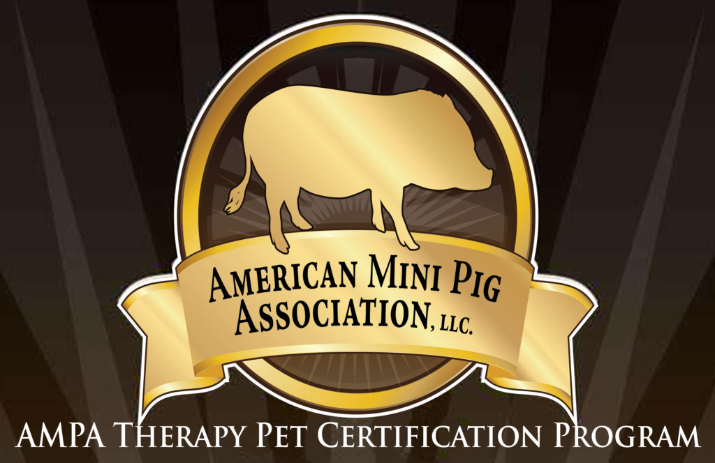 Ampa Mini Pig Therapy Pet Program