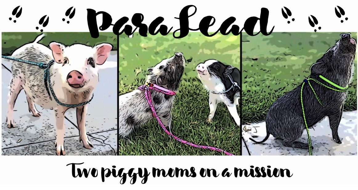 Paralead pig harness