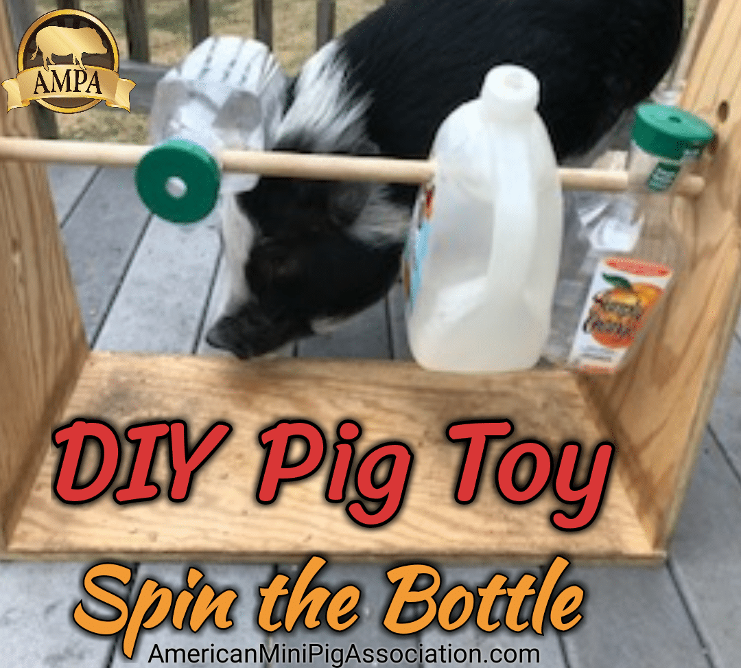 DIY pig toy, Treat Dispensing Toy