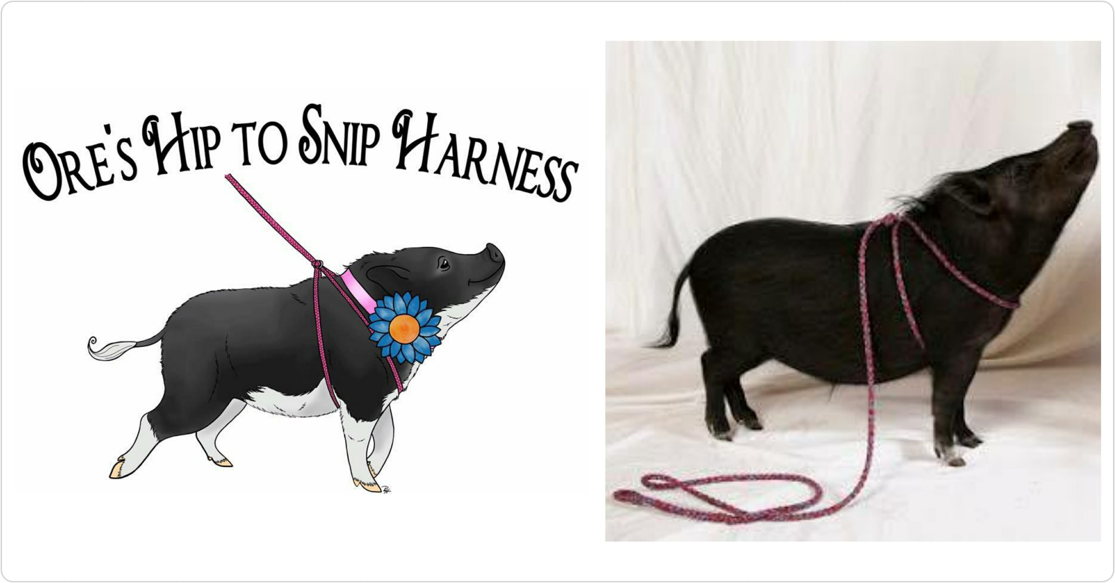 best mini pig harness, one size harness