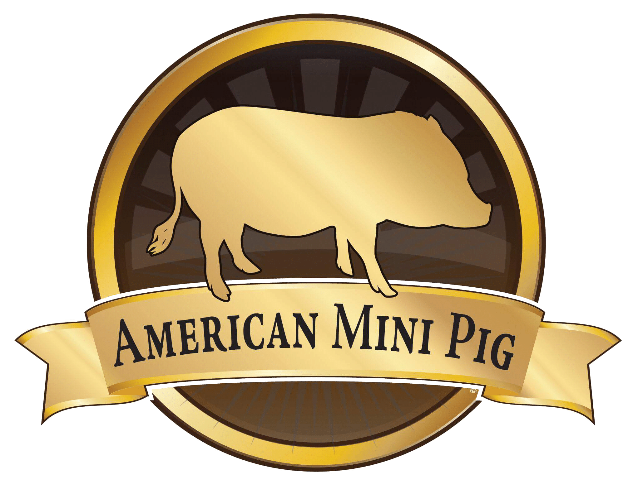 What to Do for Vomiting Pig - American Mini Pig Association