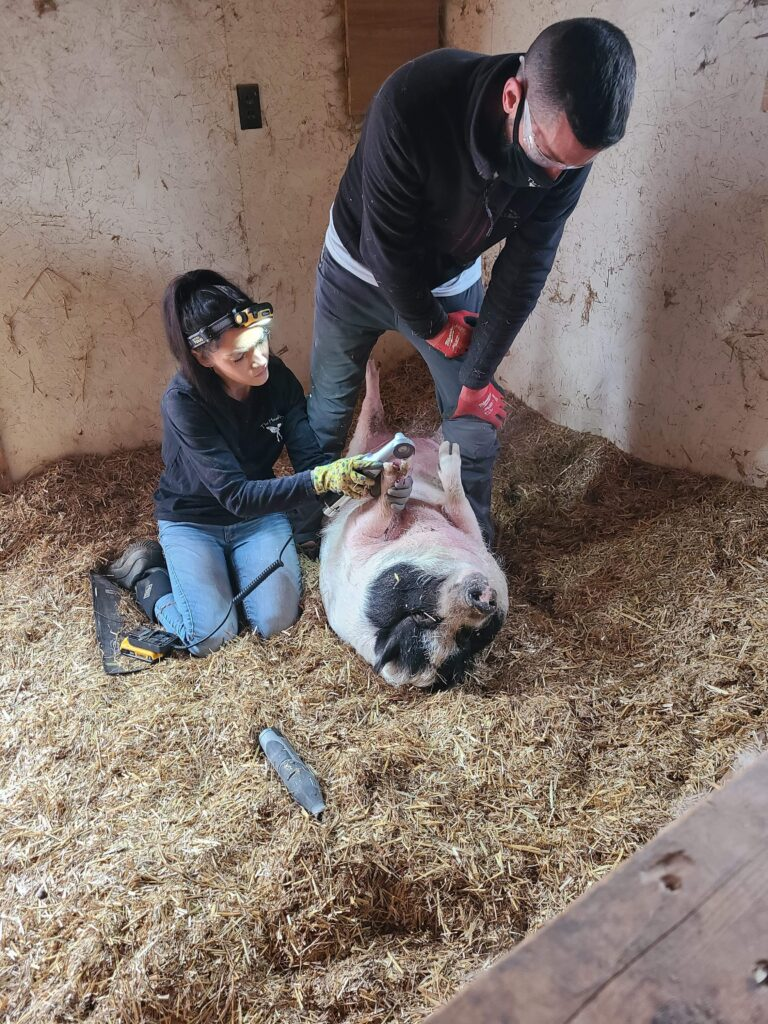 The Hoof Fairy Mini Pig Trimmer Farrier Directory